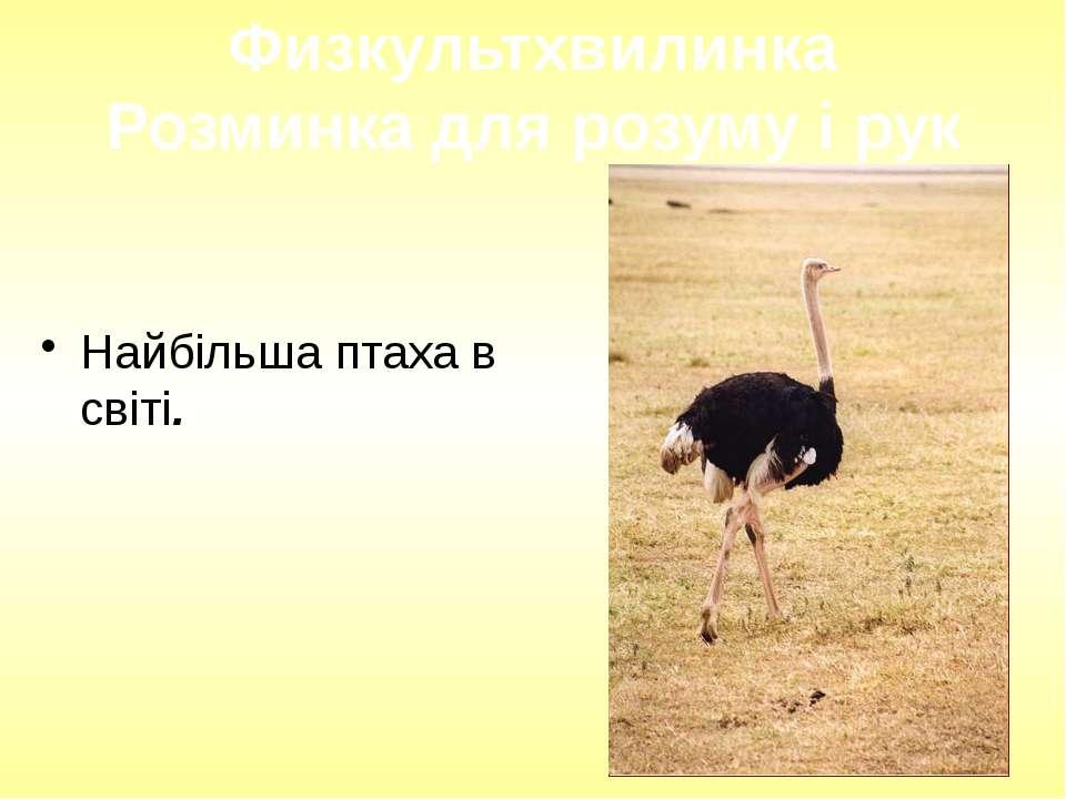 Найбільша птаха в світі. Физкультхвилинка Розминка для розуму і рук