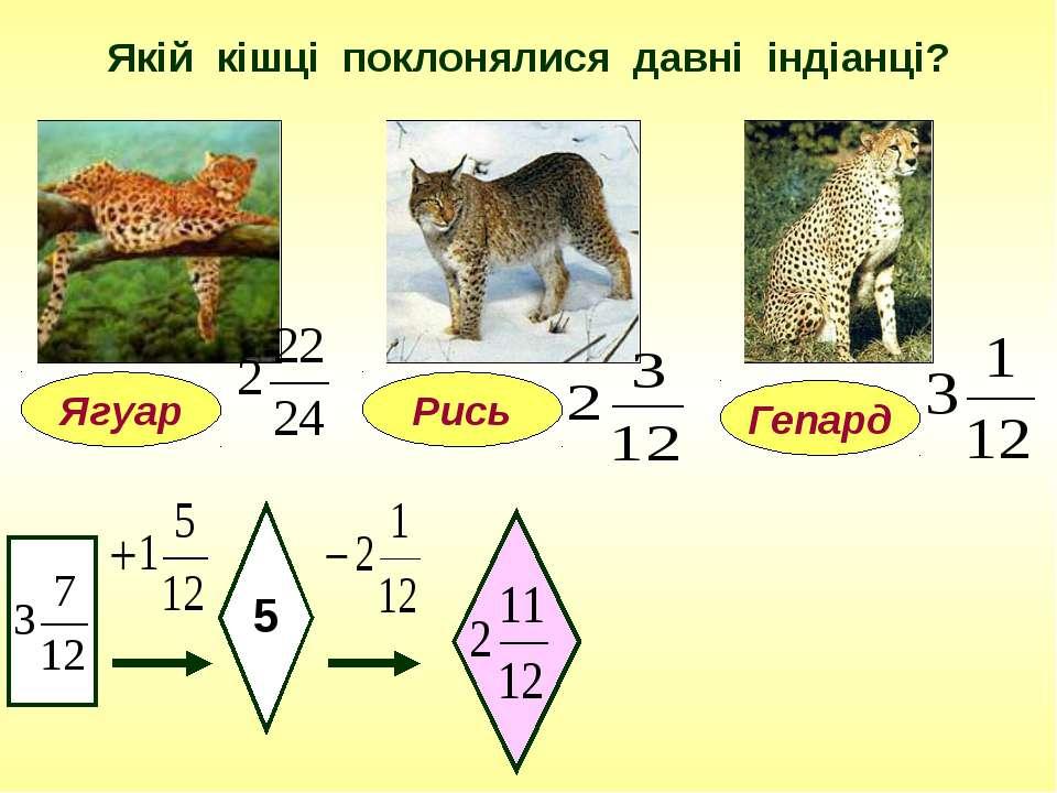 Якій кішці поклонялися давні індіанці? Ягуар 5 Гепард