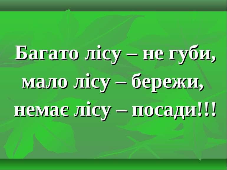 Багато лісу – не губи, мало лісу – бережи, немає лісу – посади!!!