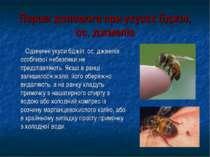 Перша допомога при укусах бджіл, ос, джмелів Одиничні укуси бджіл, ос, джмелі...