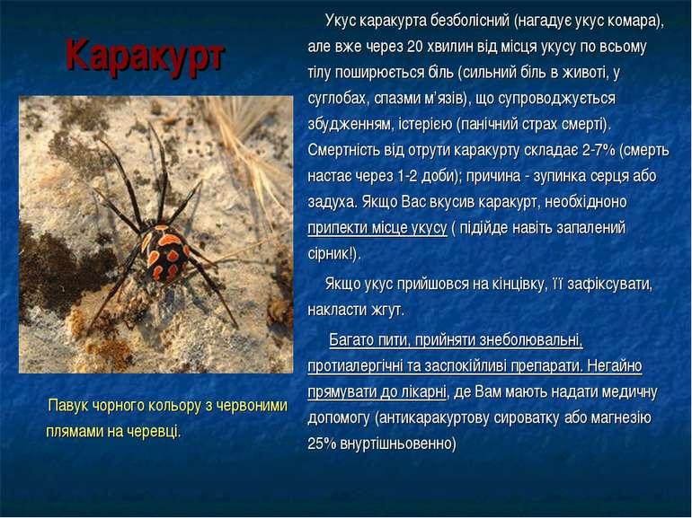 Каракурт Павук чорного кольору з червоними плямами на черевці. Укус каракурта...