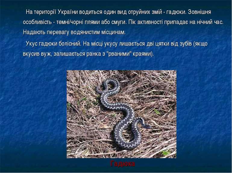 На території України водиться один вид отруйних змій - гадюки. Зовнішня особл...