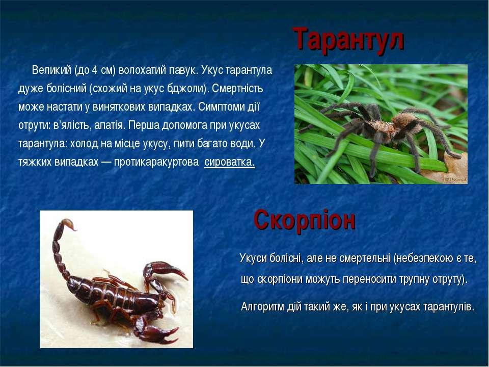 Тарантул Укуси болісні, але не смертельні (небезпекою є те, що скорпіони можу...