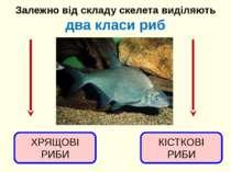 Залежно від складу скелета виділяють два класи риб ХРЯЩОВІ РИБИ КІСТКОВІ РИБИ