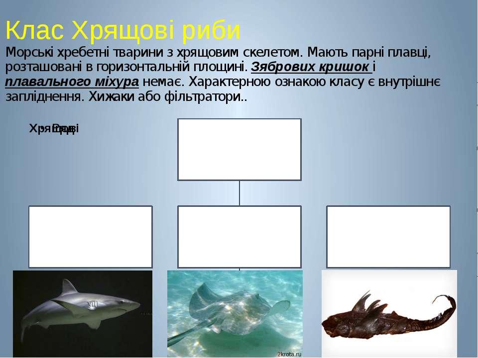 Клас Хрящові риби Морські хребетні тварини з хрящовим скелетом. Мають парні п...