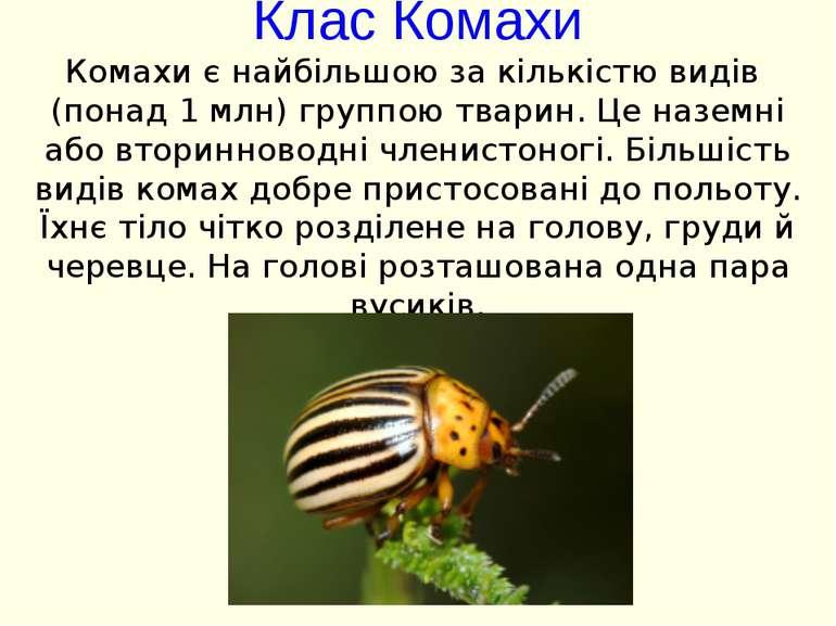 Клас Комахи Комахи є найбільшою за кількістю видів (понад 1 млн) группою твар...