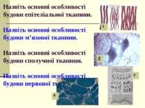 Назвіть основні особливості будови епітеліальної тканини. Назвіть основні осо...
