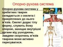 Опорно-рухова система у хребетних тварин складається з скелета і прикріплених...