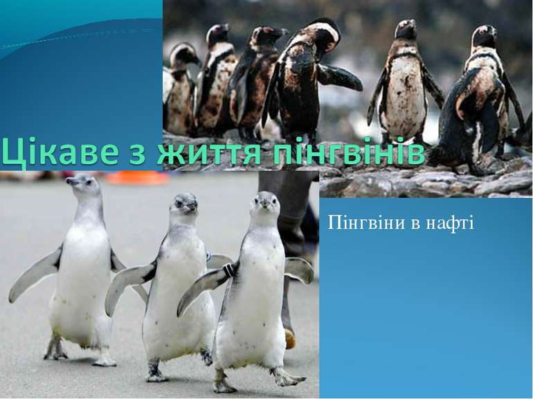 Пінгвіни в нафті