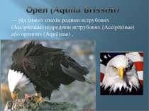 — рід хижих птахів родини яструбових (Accipitrіdae) підродини яструбових (Acc...