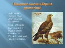 - вид хижих птахів з роду Орел родини Яструбові. Один з 9 видів роду, один з ...