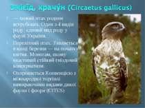 — хижий птах родини яструбових. Один з 4 видів роду; єдиний вид роду у фауні ...