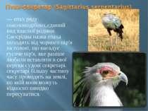 — птах ряду соколоподібних,єдиний вид власної родини. Своєрідна назва птаха п...