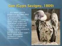— рід хижих птахів родини яструбових ряду Соколоподібні Номенклатурне зауваже...