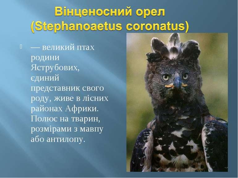 — великий птах родини Яструбових, єдиний представник свого роду, живе в лісни...