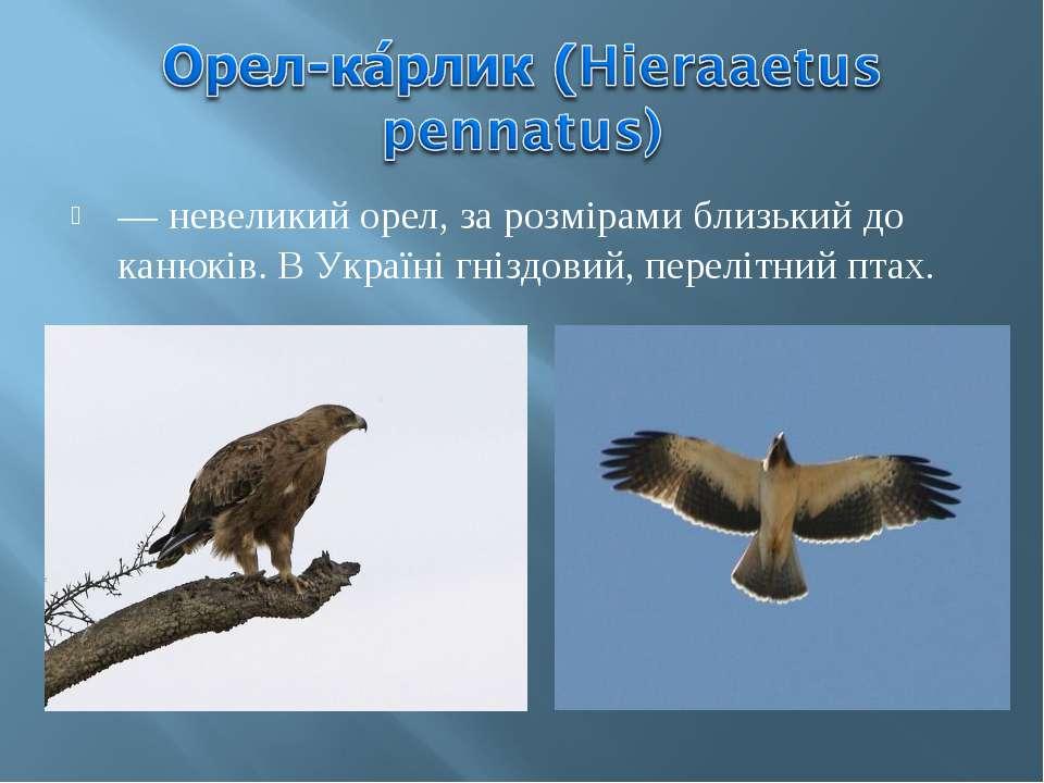 — невеликий орел, за розмірами близький до канюків. В Україні гніздовий, пере...