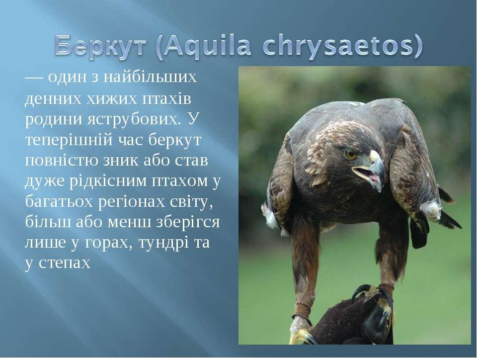 — один з найбільших денних хижих птахів родини яструбових. У теперішній час б...