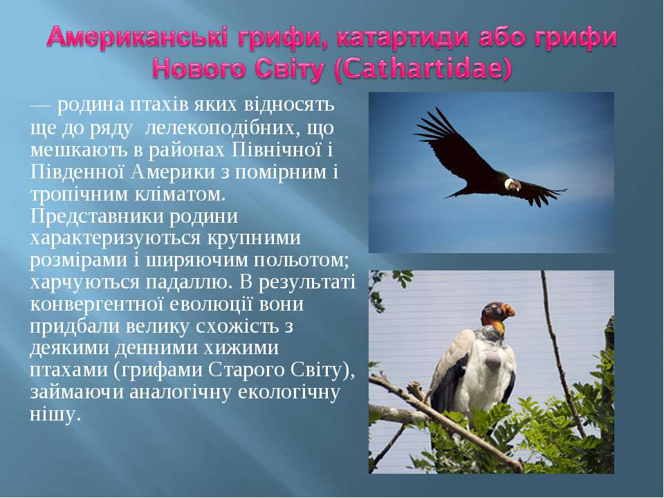 — родина птахів яких відносять ще до ряду лелекоподібних, що мешкають в район...