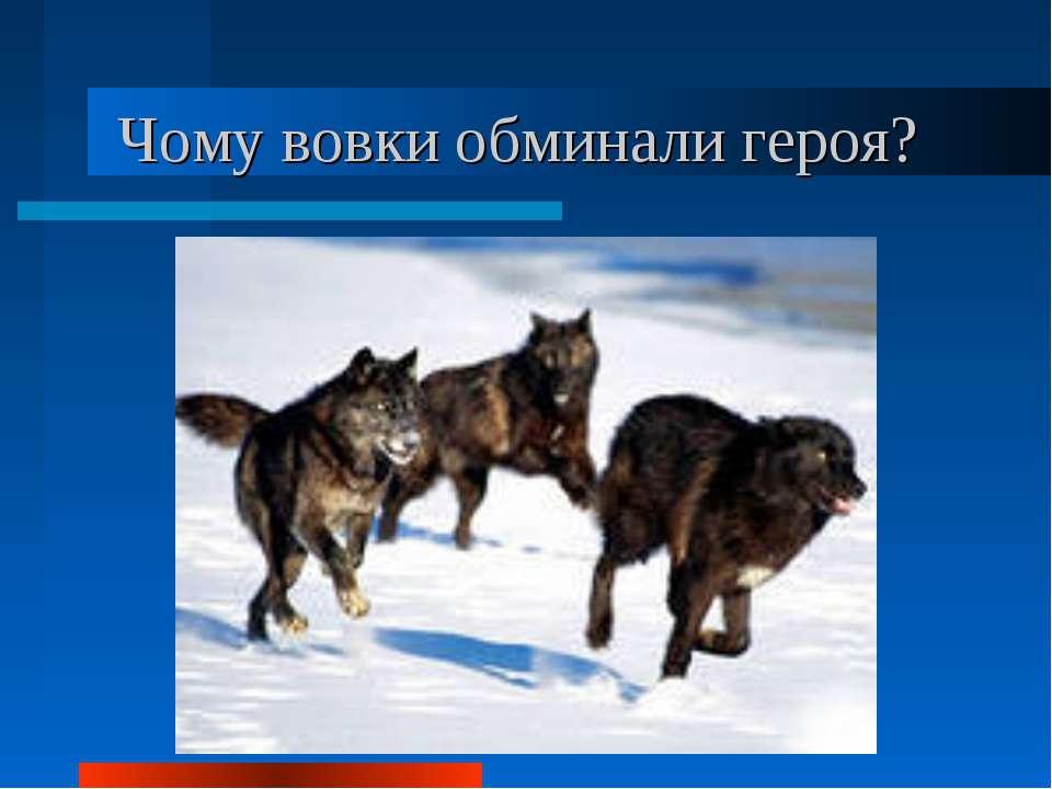 Чому вовки обминали героя?