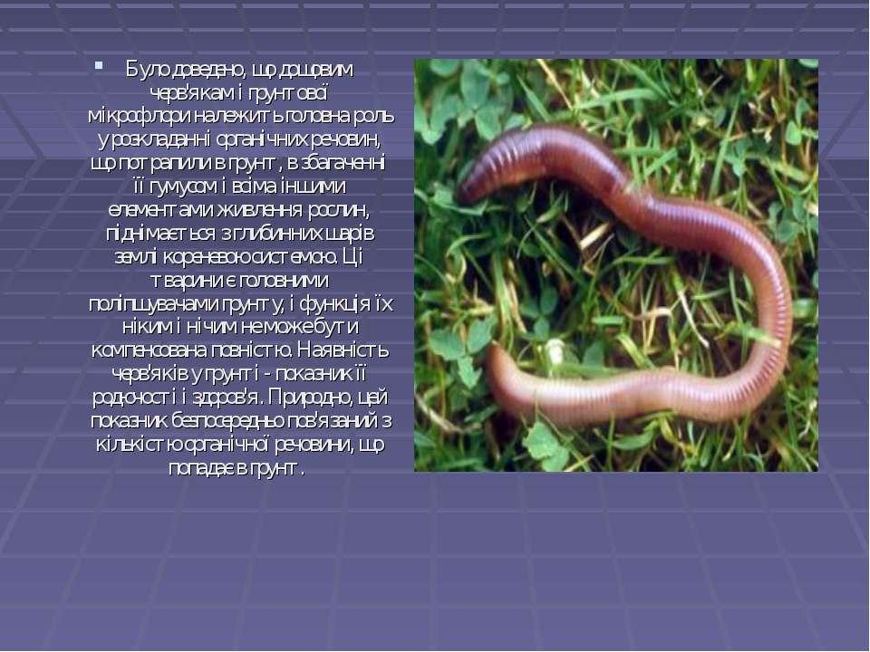 Було доведено, щодощовим черв'якам і грунтової мікрофлориналежить головна р...
