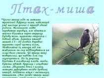 Цього птаха ніде за межами тропічної Африки нема, невеликий ряд налічує усьог...