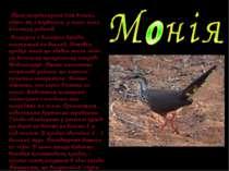 Птах неординарний для вчених, адже, як з'ясувалось, у нього нема близьких род...