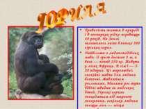 Тривалість життя в природі і в зоопарках рідко перевищує 40 років. На Землі з...