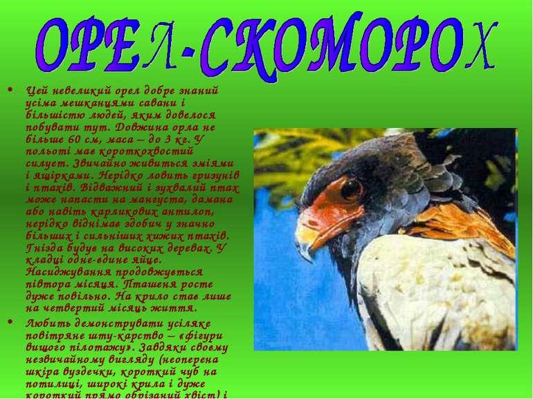 Цей невеликий орел добре знаний усіма мешканцями савани і більшістю людей, як...