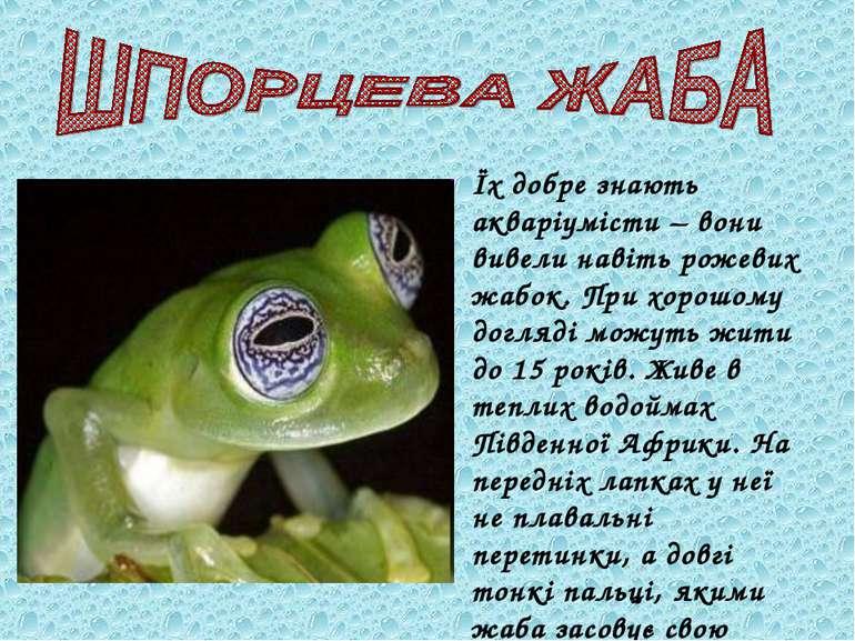 Їх добре знають акваріумісти – вони вивели навіть рожевих жабок. При хорошому...
