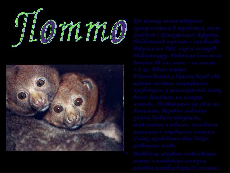 Ця тільки нічна тварина зустрічається в тропічних лісах Західної і Центрально...