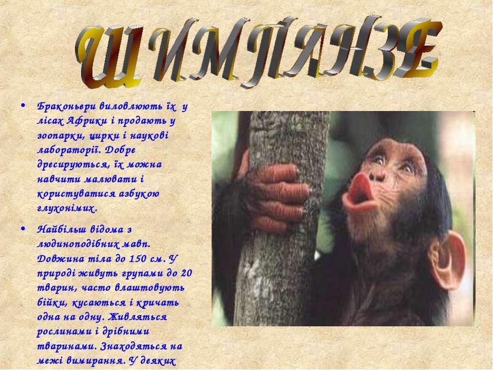 Браконьєри виловлюють їх у лісах Африки і продають у зоопарки, цирки і науков...