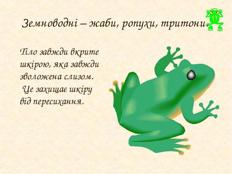 Земноводні – жаби, ропухи, тритони. Тіло завжди вкрите шкірою, яка завжди зво...