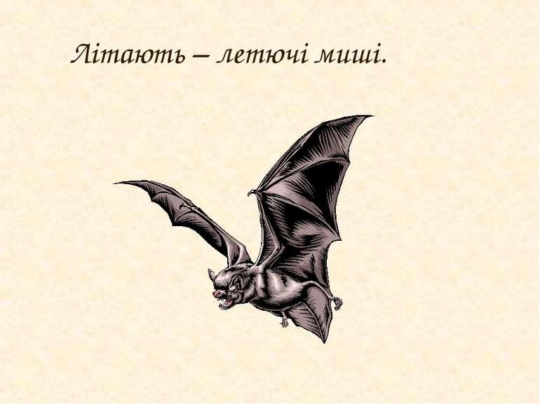 Літають – летючі миші.