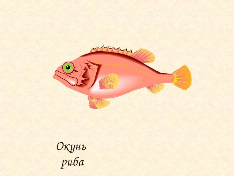 Окунь риба