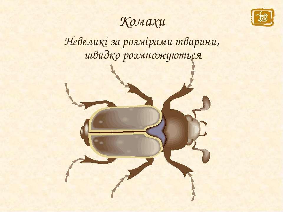 Комахи Невеликі за розмірами тварини, швидко розмножуються