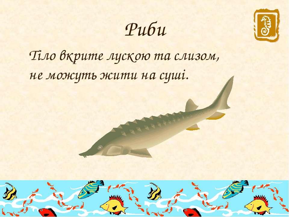 Риби Тіло вкрите лускою та слизом, не можуть жити на суші.