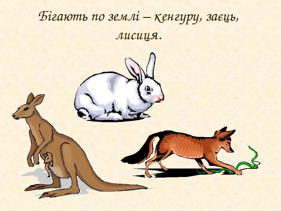 Бігають по землі – кенгуру, заєць, лисиця.