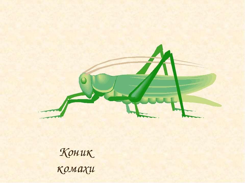 Коник комахи