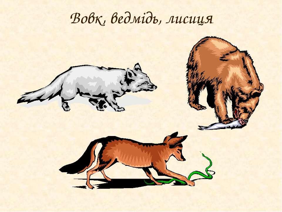 Вовк, ведмідь, лисиця