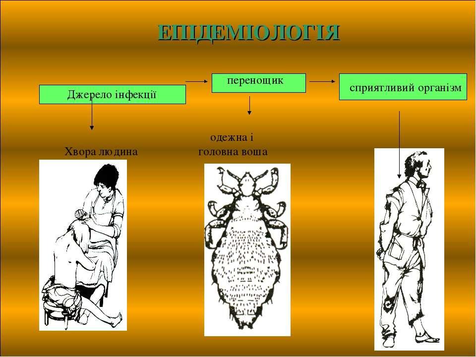 сприятливий організм ЕПІДЕМІОЛОГІЯ перенощик Джерело інфекції одежна і Хвора ...