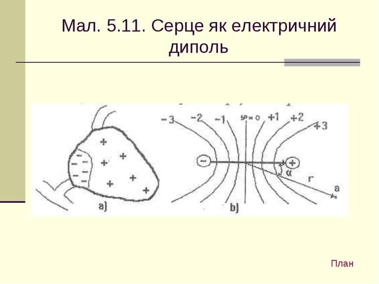 Мал. 5.11. Серце як електричний диполь План