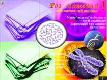 відтворення собі подібних У ядрі кожної клітини є хромосоми – носії спадкової...