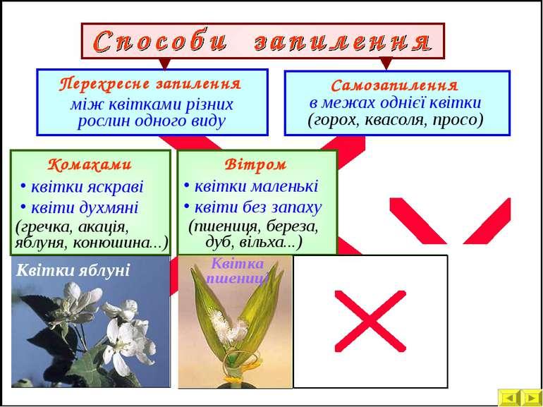 Комахами Вітром Перехресне запилення між квітками різних рослин одного виду к...
