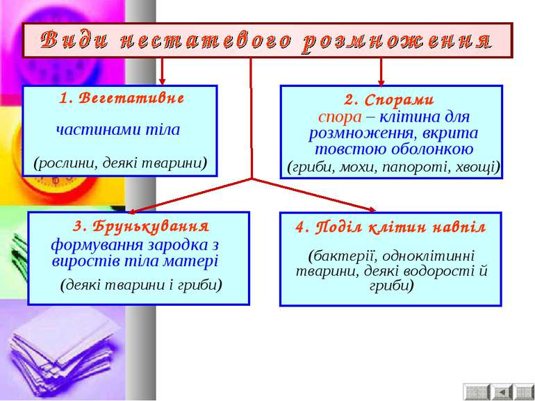 1. Вегетативне частинами тіла 2. Спорами спора – клітина для розмноження, вкр...