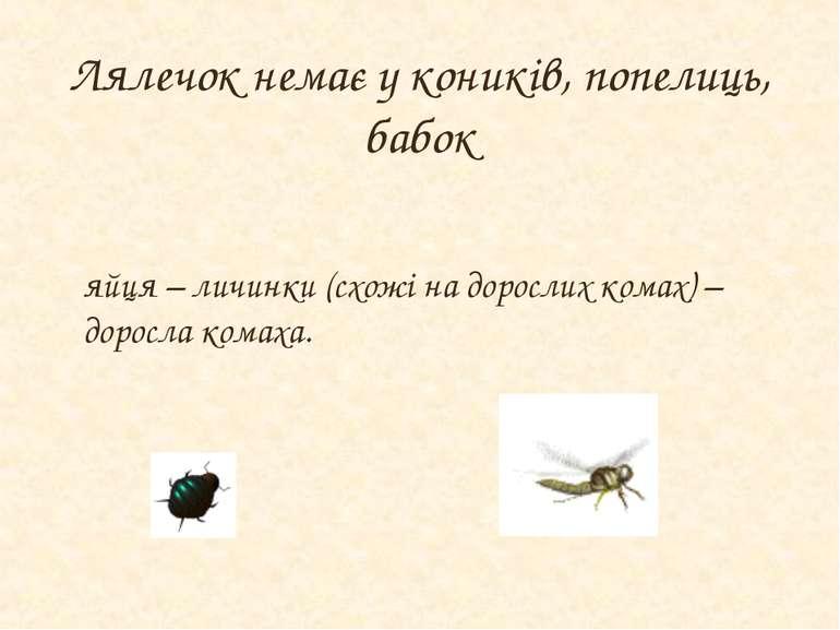 Лялечок немає у коників, попелиць, бабок яйця – личинки (схожі на дорослих ко...