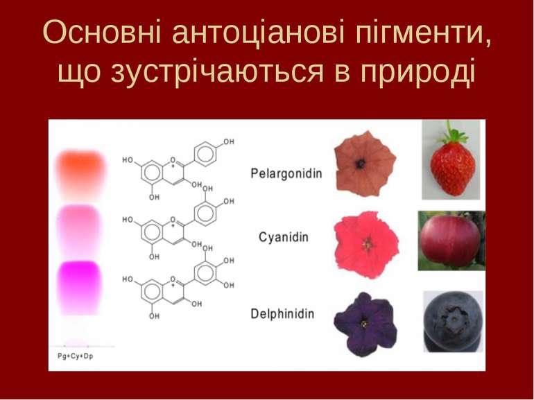 Основні антоціанові пігменти, що зустрічаються в природі