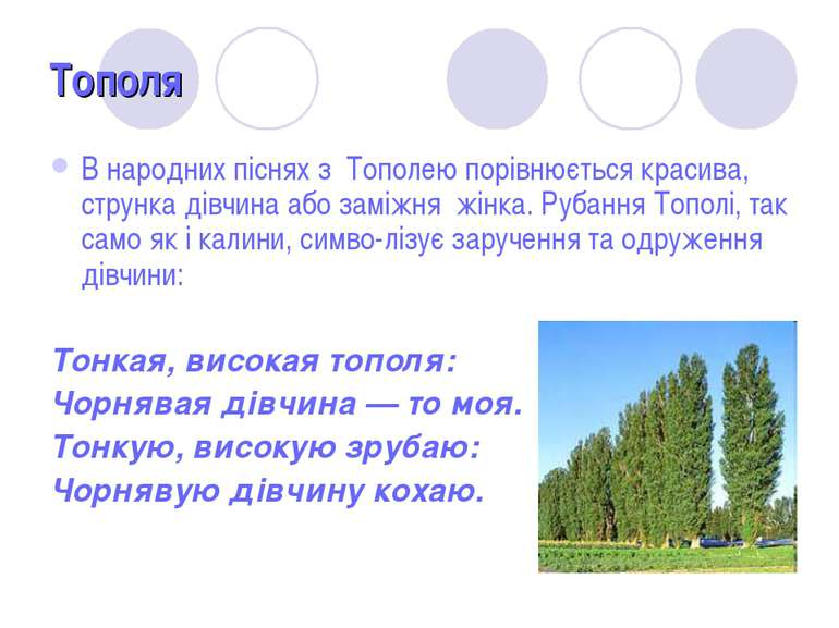 Тополя В народних піснях з Тополею порівнюється красива, струнка дівчина або ...