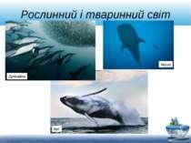 Рослинний і тваринний світ Кит Акула Дельфіни