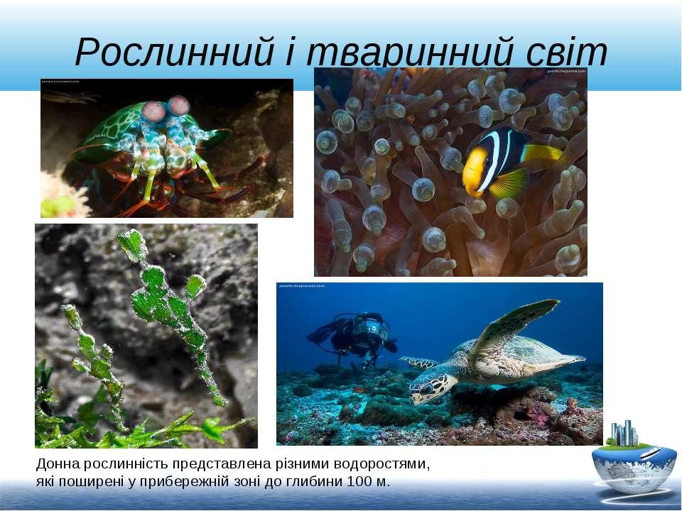 Рослинний і тваринний світ Донна рослинність представлена різними водоростями...