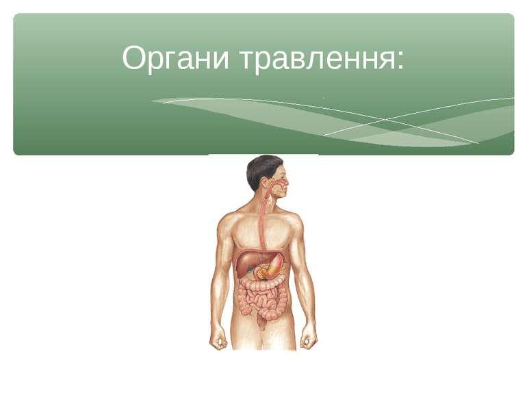 Органи травлення: